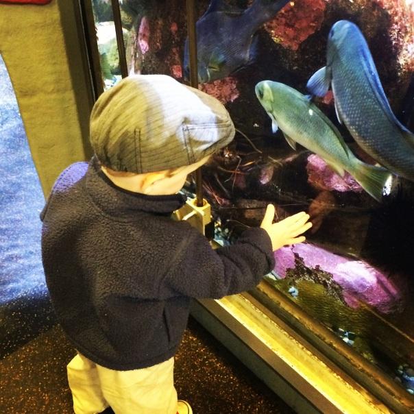 R at the aquarium