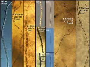 ht_fossils02_lb_150204_4x3_992