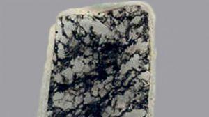 ht_fossils03_lb_150204_16x9_992